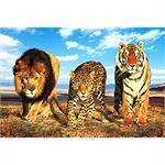 Wild Cats Poster - 24