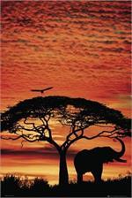 Elephant Safari Poster - 24