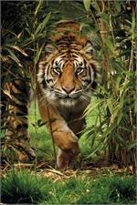 Bamboo Tiger Poster - 24