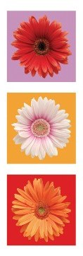 Daisies - Red, White & Orange Slim Print - 12