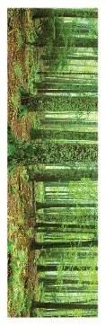 Rainforest Slim Print - 12