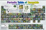 PERIODIC TABLE OF CANNABIS POSTER - 36